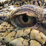 kisah-hidup-reptil
