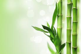 rindu-pohon-bambu